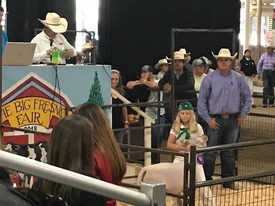 4H and FFA youth often dedicate over 300 hours to prepare their livestock for auction.